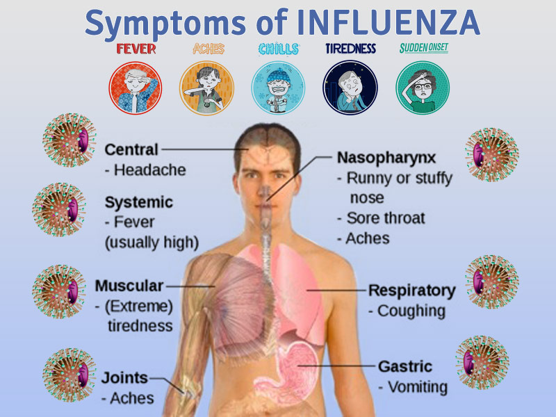 Everything about the Flu